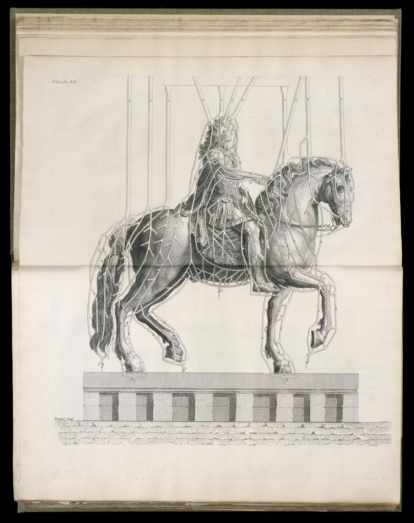 OTD_Horse